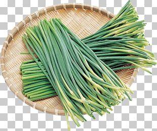 Onion Allium Fistulosum Vegetable PNG
