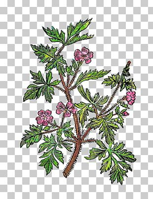 Twig Plant Stem Leaf Tree Botanical Illustration PNG