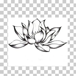 Lotus Flower Radiohead Mani Longia Putha Record Song Png Clipart