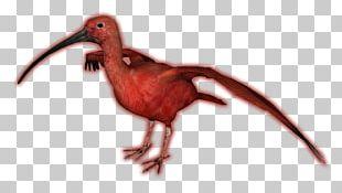 Zoo Tycoon 2 Beak Scarlet Ibis Bird PNG