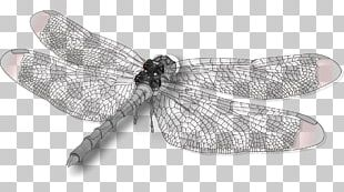 Dragonfly Insect Wing Butterfly PNG