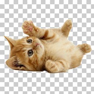 Kitten Puppy Cat Dog Cuteness PNG
