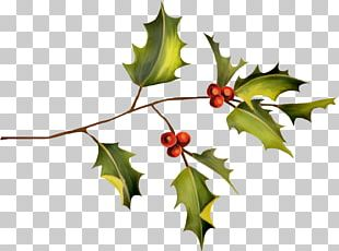 Holly Plant Leaf PNG