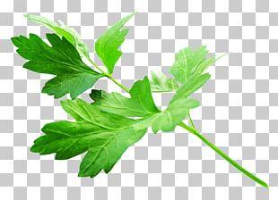 Parsley Vegetarian Cuisine Herb Vegetable Food PNG