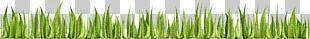 Adobe Illustrator Adobe Systems Wheatgrass U0633u0628u0632u0647 PNG