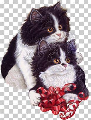 Cat Kitten Birthday Christmas PNG