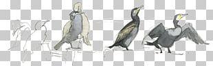 Beak Flightless Bird Feather Sketch PNG
