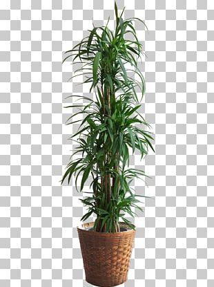 Houseplant Flower Leaf PNG