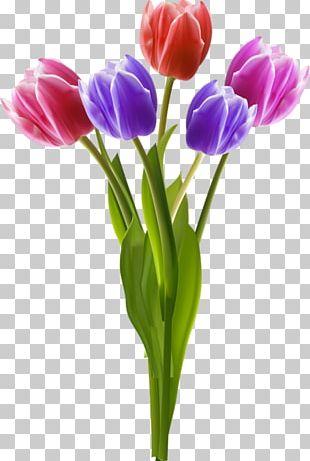 Vase Flower Tulip PNG
