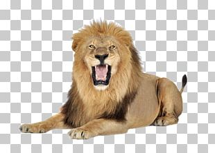 Lion Icon PNG