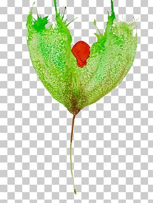 Leaf Plant Stem Petal Heart PNG