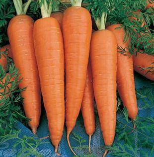 Carrot Danvers Organic Food Seed Vegetable PNG