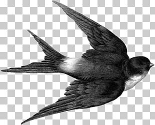Edible Bird's Nest Barn Swallow Tree Swallow PNG