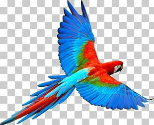 Parrot Bird Flight Scarlet Macaw PNG