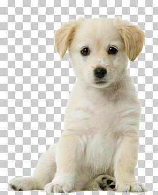 Labrador Retriever Siberian Husky Pug Puppy Cat PNG
