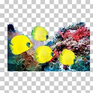 Coral Reef Television Set LED-backlit LCD Ocean PNG
