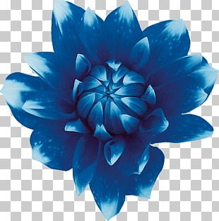 Sweet Blue Flowers Sweet Blue Flowers Red PNG