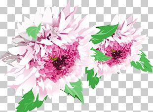 Chrysanthemum Plant Flower PNG