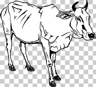 Dairy Cattle Ox Water Buffalo PNG