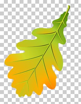 Oak Leaf Cluster Tree Leaflet Autumn Leaf Color PNG