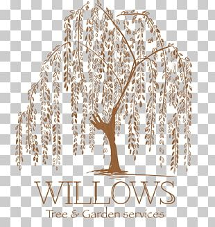 Weeping Willow Tattoo Artist Tree Drawing PNG