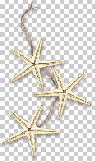 Starfish Sea Marine PNG