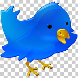 Web Development Social Media Web Button Web Design Computer Icons PNG