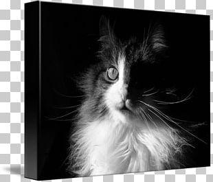 Kitten Whiskers Norwegian Forest Cat Domestic Long-haired Cat Domestic Short-haired Cat PNG