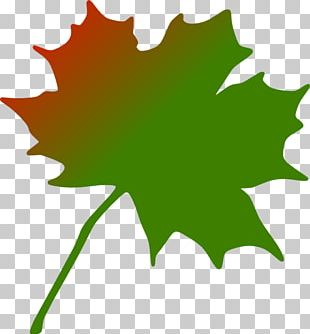 Maple Leaf Canada PNG