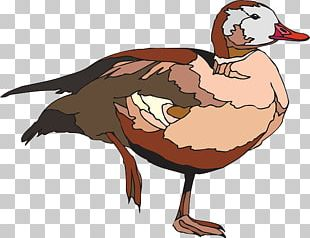 The Ugly Duckling Goose Cygnini Bird PNG