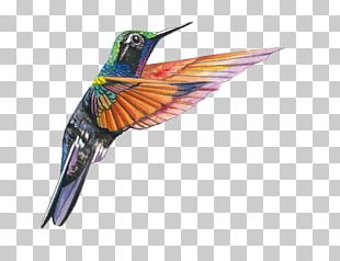 Garnet-throated Hummingbird Lamprolaima Beak PNG