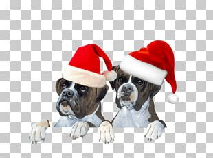 Dog Breed Puppy Boxer Santa Claus Cat PNG