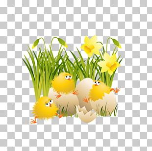 Chicken Easter PNG