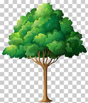 Garden Tree PNG