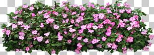Grow Light Tree Shrub Flower Garden PNG