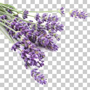 Lavender Oil Odor Herb Flavor PNG