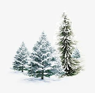 Snow Pine Combination PNG
