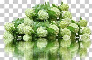 French Hydrangea Flower Garden 鉄板焼ステーキハウスマルオン PNG