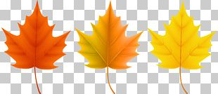 Red Maple Sugar Maple Autumn Leaf Color PNG
