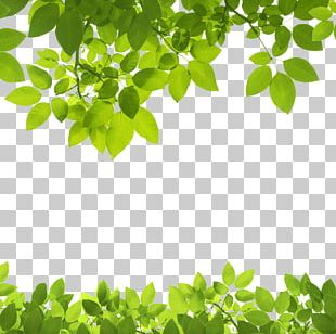 Leaf Green Stock Photography PNG