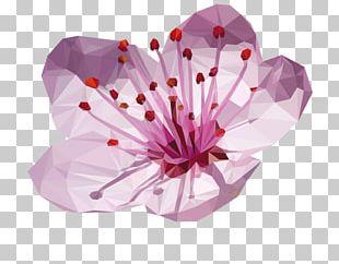 Cherry Blossom Flower Plum Blossom Japan PNG