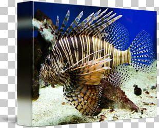 Lionfish Marine Biology Coral Reef Fish Fauna PNG