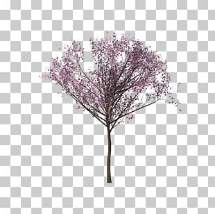 Tree Cherry Blossom Branch PNG