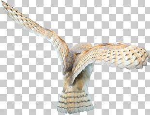 Barn Owl Bird De Logica Van De Lidwoorden In De Traditionele Filosofie PNG