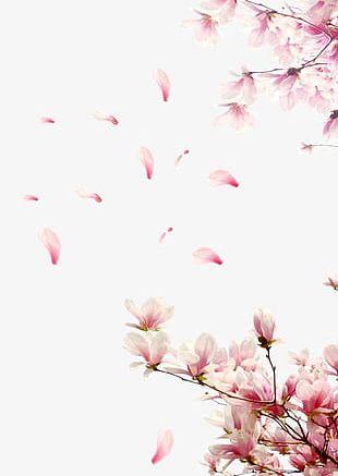 Peach Petals PNG