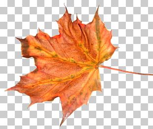 Leaf Autumn Tree Feuille Morte PNG