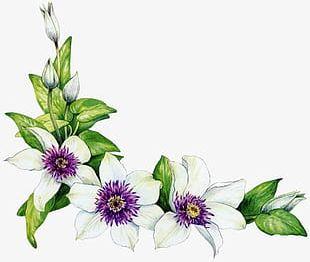 Corner Flower White Flower Fresh Green Leaves PNG