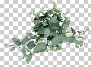 Leaf Herb Tree PNG