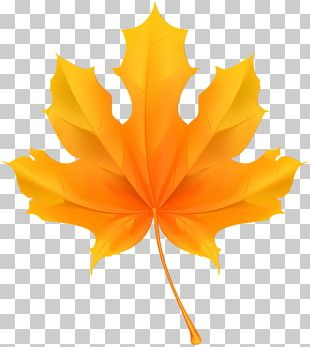 Maple Leaf Stock Photography PNG