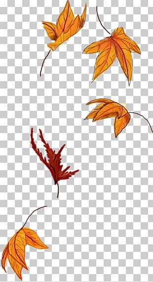 Autumn Leaf Color Autumn Leaf Color Maple Leaf Sticker PNG